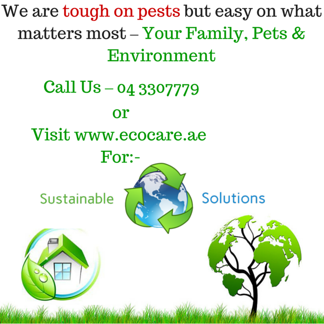 Ecocare Cleaning & Pest Control Services - Services we provide: Pest Control, Bed bugs Treatment, Anti-Termite Treatments, Rodent Control & Proofing, Bird Control & Proofing, Storage pest management, Quarantine Fumigation, Container Fumigation, Water Tank Cleaning & Disinfection, Swimming pool Cleaning & Disinfection, Pipeline Cleaning & Disinfection, Cooling Tower Cleaning & Disinfection, Legionella control